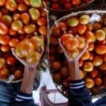 Pedagang Mengeluh Harga Tomat di Kota Madiun Capai Rp11.000/kg