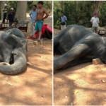 KISAH TRAGIS : Kelelahan Saat Atraksi, Gajah Ini Akhirnya Mati