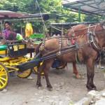 Kusir andong, Budi Raharjo alias Sisar (kanan) duduk di atas andong menunggu penumbang sembari menunggu kuda menghabiskan pakan, Selasa (26/4/2016). (Bernadheta Dian Saraswati /JIBI/Harian Jogja)