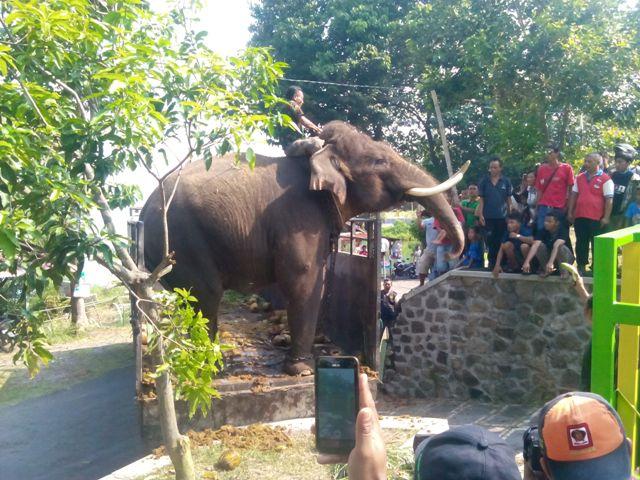 Petugas membersihkan gajah jantan dari Tegal, Panamtu, yang baru tiba di Objek Wisata Sendang Asri Waduk Gajah Mungkur (OWSAWGM) Wonogiri, Minggu (24/4/2016). (Rudi Hartono/JIBI/Solopos)