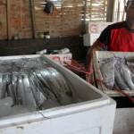 PERIKANAN JATIM : Musim Ikan Layur, Ratusan Andon Serbu Pesisir Tulungagung dan Trenggalek