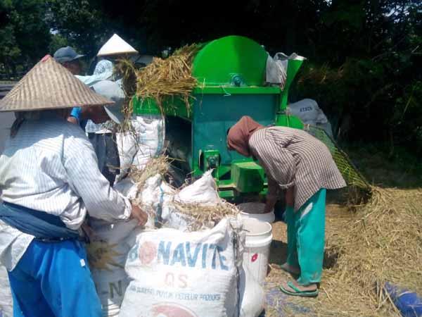 Peni (paling kanan) saat menjadi buruh panen padi yang biasa disebut dengan istilah derep, di Kawasan, Jalan PJKA, Tridadi, Sleman, Selasa (5/4/2016). (Sunartono/JIBI/Harian Jogja)