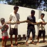 Wahyu Prasetyo, 20, (dua dari kiri) memegang ular bersama warga lainnya di Wisma Galih Sono Kampung Ngledok RT 003/RW 010, Kelurahan Sragen Tengah, Sragen, Sabtu (30/4/2016). (Tri Rahayu/JIBI/Solopos)
