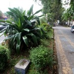 PENATAAN TAMAN KOTA SOLO : Pembongkaran Taman Jl. Slamet Riyadi Belum Final, Ini Alasannya