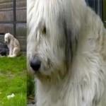 Anjing setia menunggu tuannya (Mirror)