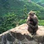 Ilustrasi monyet Gua Kreo Kota Semarang (Youtube.com)