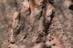 Jejak kaki dinosaurus ditemukan doi Barcelona (Mirror.co.uk)
