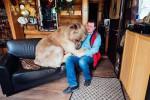 Seekor beruang diperlakukan sebagai anak di Rusia (Caters)