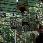 KEGIATAN NARAPIDANA : Penghuni Lapas akan Dilatih Ternak Love Bird