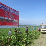 Sejumlah warga bergotong royong membersihkan eceng gondok di rawa jombor, Krakitan, Bayat, Klaten, Sabtu (28/5/2016). Eceng gondok di rawa jombor dinilai sudah mengganggu ekosistem perairan tersebut. (Ponco Suseno/JIBI/Solopos)