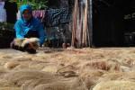 Sabut kelapa dijemur di bawah sinar matahari. (Rima Sekarani I.N./JIBI/Harian Jogja)