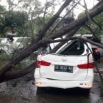 Sebuah mobil Daihatsu Xenia AD 8643 OA tertimpa batang pohon cemara yang lapuk di Jl Bhayangkara, Baron, Solo, Selasa (14/6/2016). Beberapa pohon di kawasan Baron, Panularan dan Penumping bertumbangan akibat hujan dan angin kencang yang melanda kawasan tersebut. (Sunaryo Haryo Bayu/JIBI/Solopos)