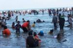 Semua Pantai di Gunungkidul Ramai Wisatawan, Habitat Penyu Terancam