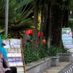 Penyedia jasa penukaran uang baru terlihat menggelar lapak di Jl. Jendral Sudirman, Solo, Senin (13/6/2016).