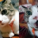 Kucing lucu Hokuro-kun yang doyan makan sayuran. (Istimewa)