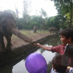 KORUPSI JOGJA : Adik Paku Alam X Jadi Saksi Penggelapan Jatah Makan Harimau Gembiraloka Zoo