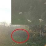 Foto makhluk terbang diduga peri. (Dailymail.co.uk)