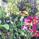 Aneka tanaman bunga anggrek ( Mariyana Ricky P.D./JIBI/Solopos)