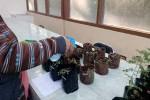 Contoh polybag jerami hasil karya mahasiswa UNY, bersanding dengan polybag berbahan plastik buatan pabrikan. (JIBI/Harian Jogja/dok.UNY)