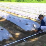 Petugas BPTP Jateng sedang memasang jaringan pipa untuk penerapan sistem pengairan atau irigasi tetes pada demo plot (demlot) tanaman cabai di areal kebun di Kompleks Pemkab Boyolali di Kemiri, Mojosongo, Boyolali. Demlot cabai disiapkan untuk peringatan Hari Pangan Sedunia (HPS). (Hijriyah Al Wakhidah/JIBI/Solopos)