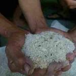 Warga Dusun Pangkle, RT 032, Desa/Kecamatan Sambungmacan, Sragen, menunjukkan beras seharga Rp25.000/15 kg, yang sudah berkutu dan kepompong ulat, Senin (29/8/2016). (Moh. Khodiq Duhri/JIBI/Solopos)