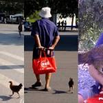 Ayam juga bisa setia kepada majikan. (Shanghaiist.com)