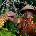 Kadin Jateng Tak Henti Dorong Produk Unggulan Daerah