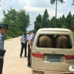 Mobil ditilang karena pamer pantat sapi. (Shanghaiist.com)