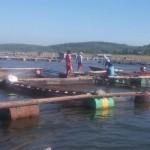 PERIKANAN BOYOLALI : Puluhan Ribu Ikan di Waduk Kedungombo Mati, Ini Penyebabnya