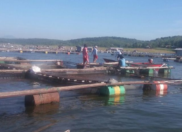 Keramba ikan di Waduk Kedungombo. (JIBI/Solopos/Istimewa)