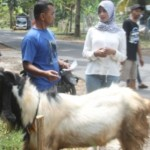 Ratusan Hewan Ternak Dapat Layanan Kesehatan Gratis
