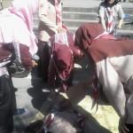 Peserta pingsan saat Upacara Peringatan ke-55 Hari Pramuka di Alun-alun Kabupaten Boyolali, Rabu (24/8/2016). (Hijriyah Al Wakhidah/JIBI/Solopos)