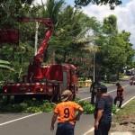 Ada Pemangkasan Pohon, Aliran Listrik di Wilayah Jogja Ini Dimatikan Sementara