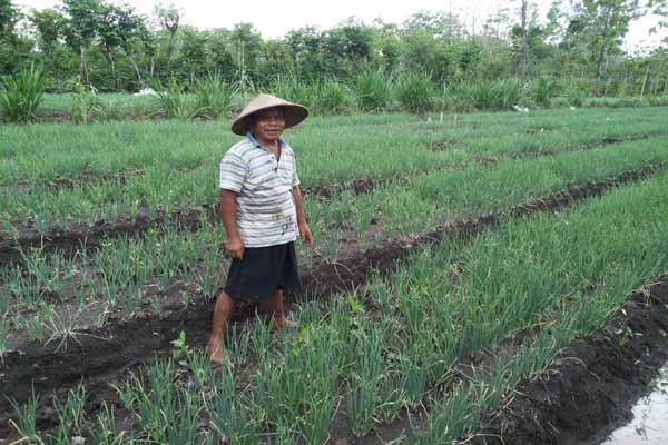 Subagyo, salah seorang petani di Dusun Selang 1, Desa Selang, Kecamatan Wonosari bersama pertanian bawang merah yang akan menuju masa panen, Selasa (27/9/2016). (Mayang Nova Lestari/JIBI/Harian Jogja)