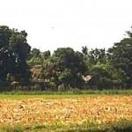 Dusun Karang Kenek, Desa Olean, Situbondo (Indocropscircles.wordpress.com)