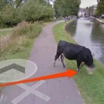 Google blur wajah sapi di Google Map (Google)