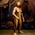 Homo Floresiensis di Museum of Natural and Science, Tokyo (livescience.com)