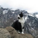 Kucing penyelamat pendaki yang tersesat (Daily Mail)