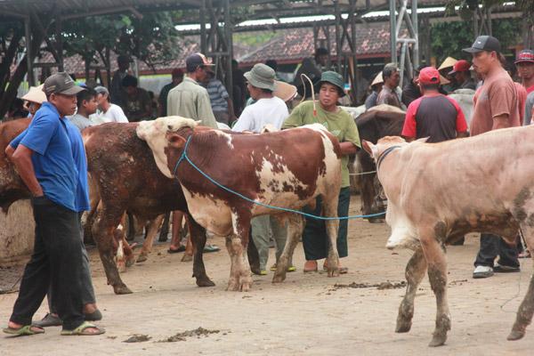 Aktivitas jual beli hewan di Pasar Hewan Siyonoharjo, Desa Logandeng, Playen. (David Kurniawan/JIBI/Harian Jogja)