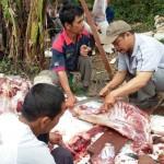 Masyarakat Desa Jlarem, Kecamatan Ampel, Boyolali, menyembelih hewan kurban yang merupakan bantuan dari Kelompok Kerja Penyuluh (Pokjaluh) Kementerian Agama (Kemenag) Boyolali, Rabu (14/9/2016). (Istimewa)