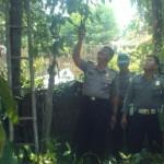 PENEMUAN MAYAT PONOROGO : Terjatuh Dari Pohon Melinjo, Petani Ponorogo Ini Tewas