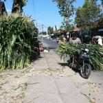 Hijauan pakan ternak dijual di sepanjang jalan dusun Trimulyo, Desa Kepek, Wonosari, Gunungkidul, Jumat (2/9/2016). (Mayang Nova Lestari/JIBI/Harian Jogja)