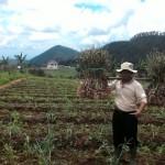 Sumedi memikul hasil panen bawang putih. Dia membantu rekannya, Bejo memanen bawang putihnya, Selasa (27/9/2016). (Danur Lambang Pristiandaru/JIBI/Solopos)
