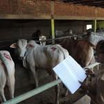 BANTUAN PEMERINTAH : DPPKP Bantul Verifikasi Kelompok Ternak Penerima Bantuan