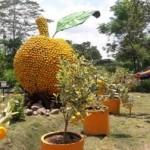 HARI PANGAN SEDUNIA : Setelah Menara Jagung, Jeruk Raksasa Juga Hiasi Kebun Pemkab Boyolali