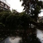Tak Hanya di Jl. Arifin, 4 Pohon di Solo Tumbang Berbarengan