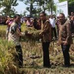 Produksi Beras 2016 Surplus, Menteri Pertanian Klaim Tak akan Impor Beras