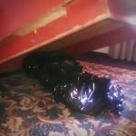 Mayat dibungkus plastik di Hotel El Senador (Dailymail)
