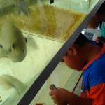 PELUANG USAHA : Budidaya Ikan Hias Belum Diminati Warga Kulonprogo
