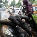 ANGIN KENCANG SOLO : Pohon Tumbang di Jl. Slamet Timpa Honda Jazz